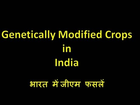 GM Crops in Hindi