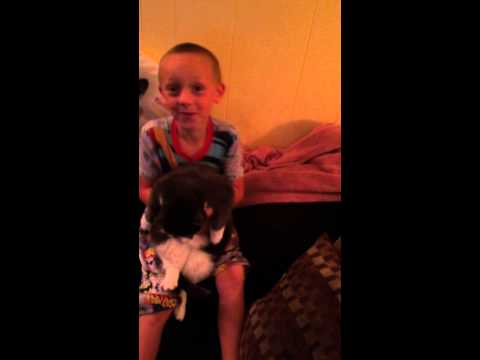 6 year old makes cat dance to whip nae nae