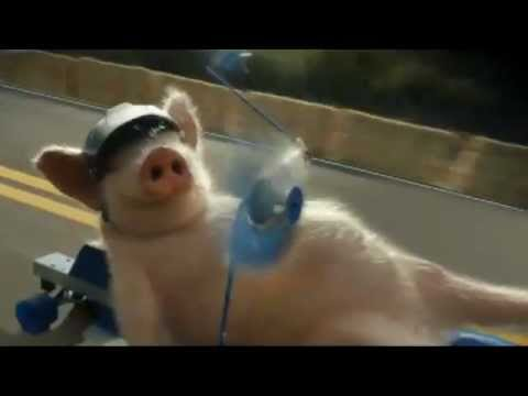 New Geico Pig Commercial Parody! Must Watch!! video