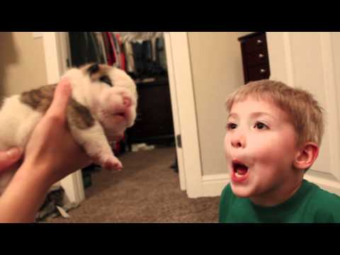 Cute English Bulldog Puppy Kisses Little Boy