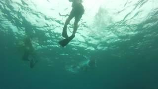 Stingray - Underwater Music Festival 2017