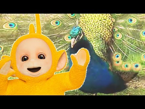Teletubbies: Animals Pack 5 - Hd Video video