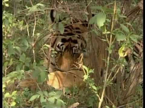 A film on illegal wildlife trade in India