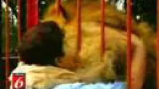 Thumb El abrazo de un león a su rescatista