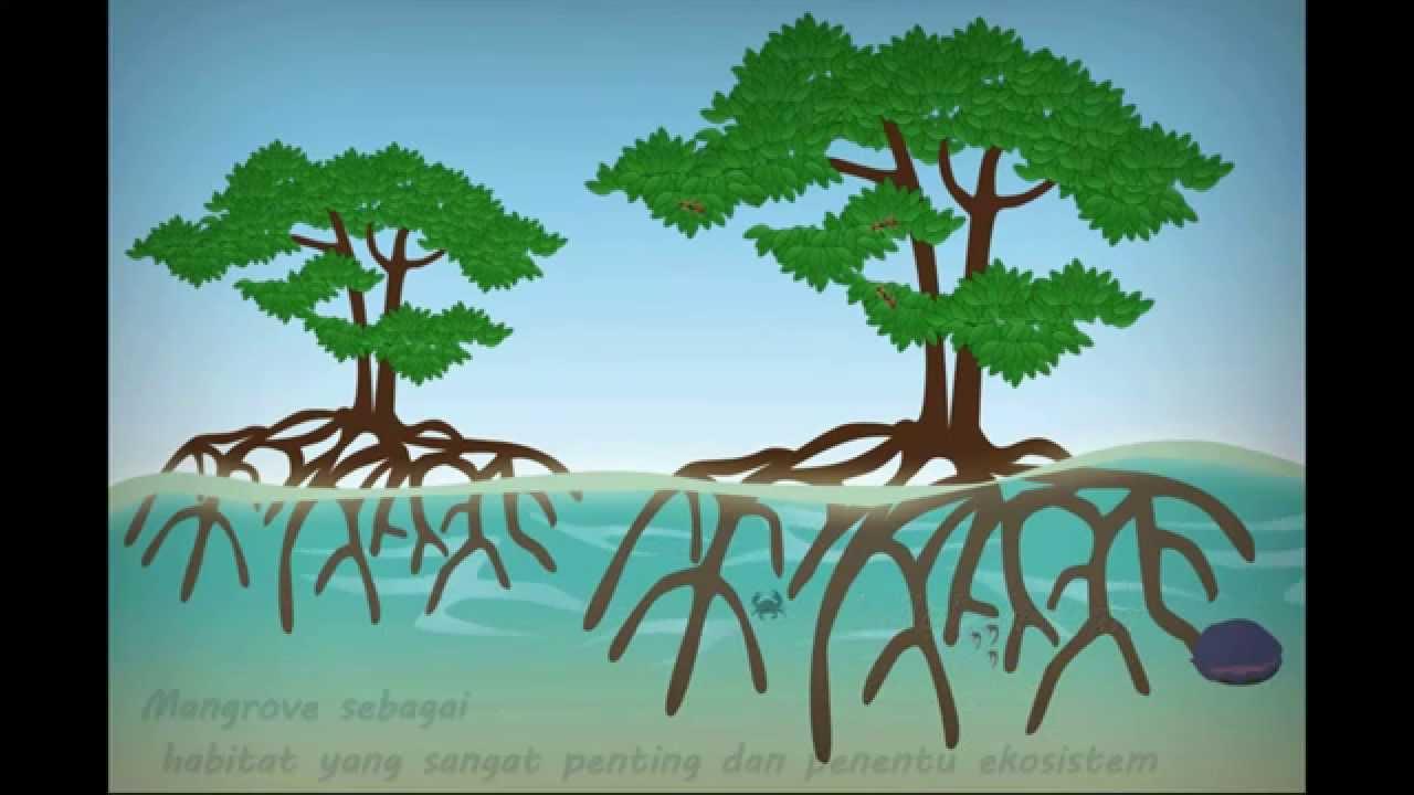 Mangrove cartoon