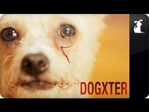 Dogxter - Dexter Parody - Morning Routine