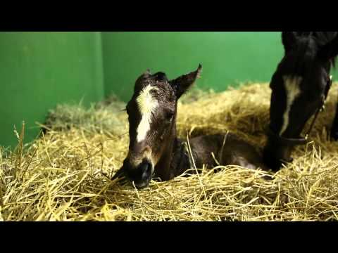 Zenyatta's First Filly April 20, 2014