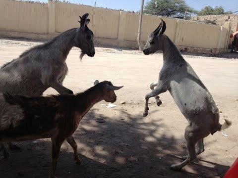 Open World PvP...On A Goat! - Legion Alpha