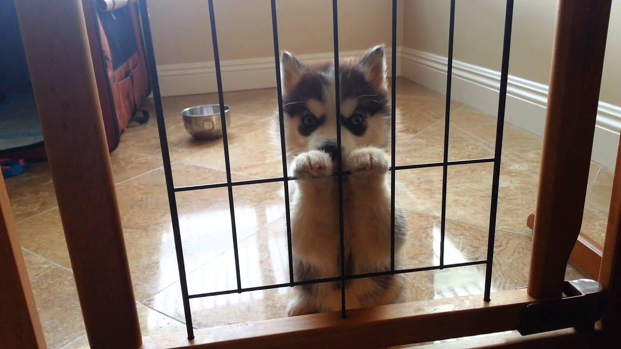 Baby Vs Dog Videos