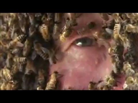 Supernatural powers of animals - BBC