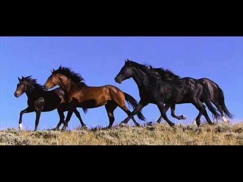 Александр Рыбак - Horses