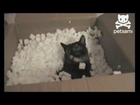黒猫だから可愛さ倍増!発泡スチロールをまき散らす猫