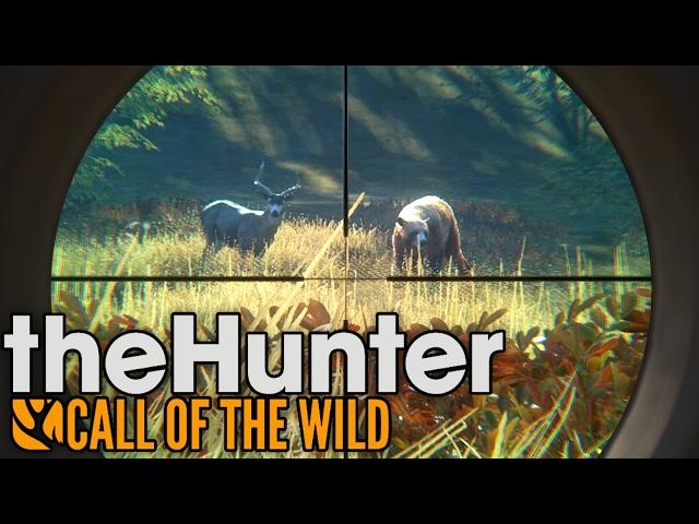 Руководство запуска: theHunter Call of the Wild по сети