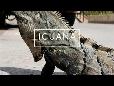 Iguana (Original Mix) - Voxxel