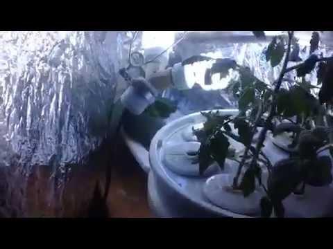 Update Bucket Hydroponics