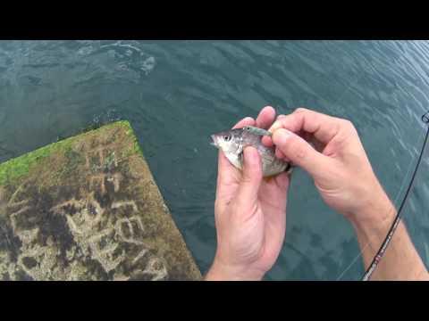 рыбалка в сочи на море в мае