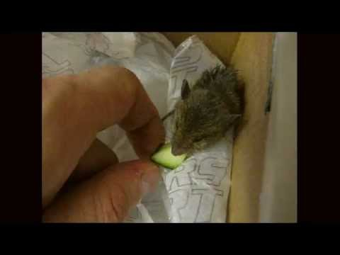 Baby Field Baby Field Mouse Hand