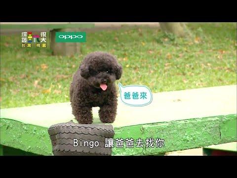 【合輯】BINGO賣萌又一發!!綜藝玩很大