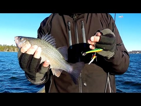 Winter Perch Fishing or