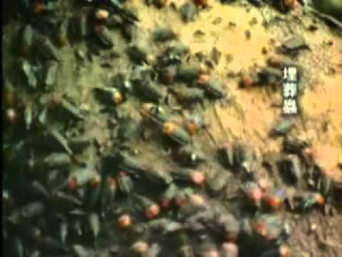 【陽明山國家公園管理處】六足王國-森林中的分解者