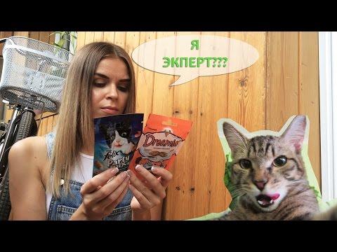 Я ЭКСПЕРТ? / Выбор за котэ: DREAMIES vs. FELIX