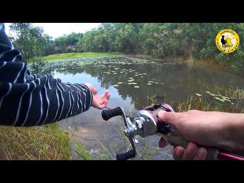 ตกปลาช่อนบ่อขุดหน้าดินกับกบลุงใหญ่ + กล้อง SJ4000 #1 (Fishing striped snakehead)