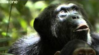 Funny Talking Animals - Walk On The Wild Side - Series 2, Episode 2 Preview - BBC One