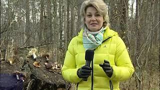 Радиация в лесах Ленинградской области