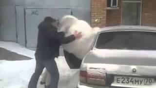 Plüss állat betuszkolása az autóba