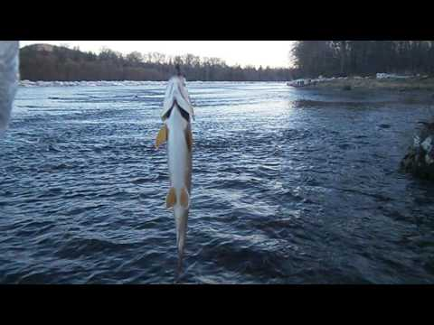 весенняя рыбалка на реке хор