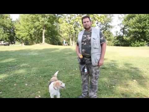 Kutya Duma - I. rész (Klikker tanítás) (Dog-Speech)