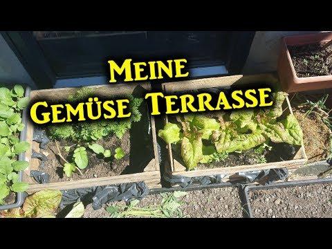 """Meine Gemüse Terrasse """"Erste Garten Saison in Norwegen"""""""