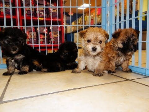 Charlotte County Rescue Dogs