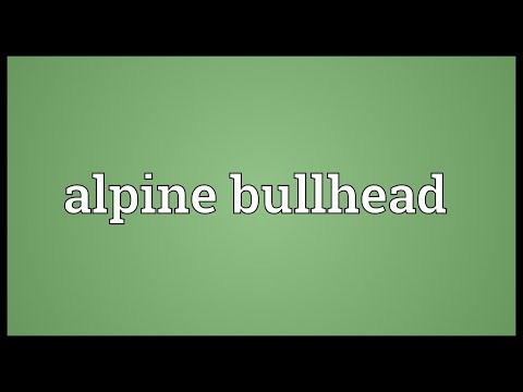 Header of Alpine Bullhead