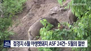 6월 야생멧돼지 ASF 24건..5월의 절반