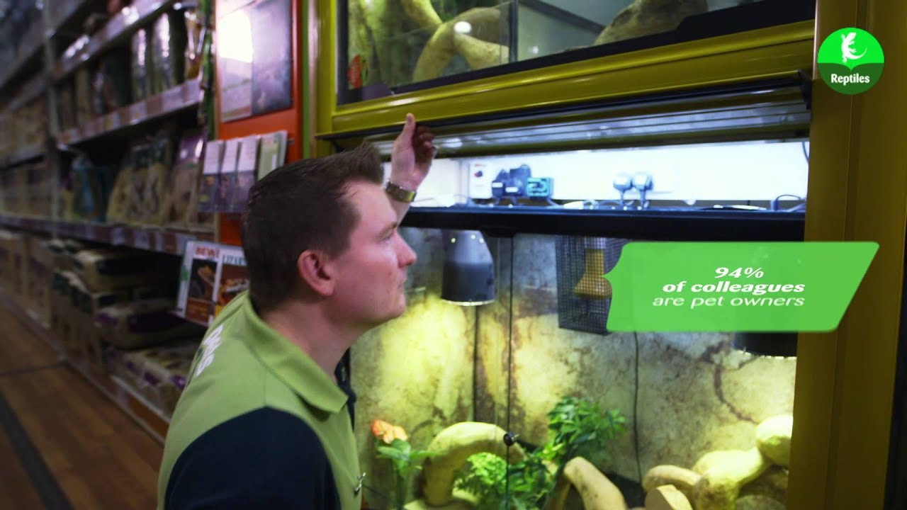 Reptiles Pets at Home Title Making Our Pets at Home
