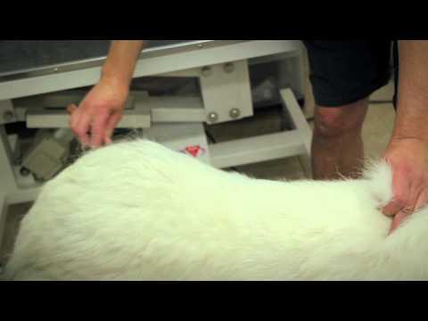 brossage et la mue du chien comment brosser et toiletter un chien