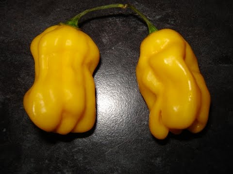 7 Pot Chaguanas Yellow Pod Test