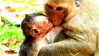 Dana Really Good To Baby Lori and Dana Love Baby Lori |  Baby Aiden Fall Down From Tree Nearly Die