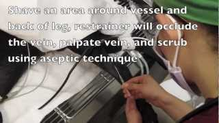 How to Place A Canine Lateral Saphenous IVC
