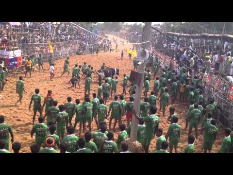 Palamedu Jallikattu 2014 [hd] - Raamesh Keerthi video