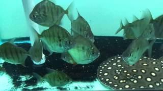AquaScapeOnline.com