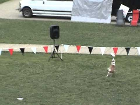 Derby City Disc Dogs at Elizabethtown Community and Technical College