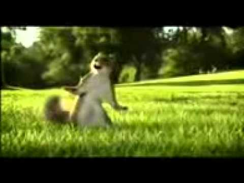 Kit Kat Squirrel video