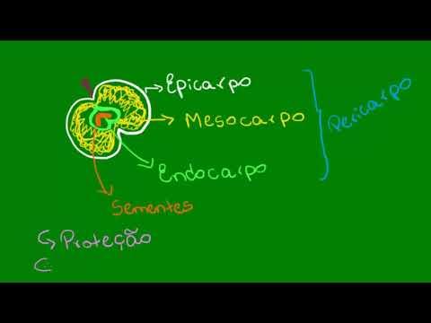 Frutos - Botânica - Biologia