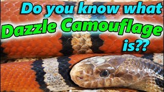 The 6 Types of Camouflage and Mimicry (as seen in reptiles)