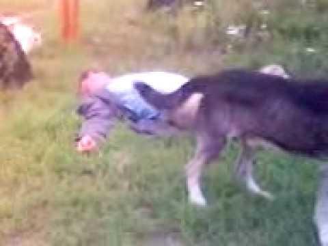 секс с собакой » порно онлайн рунета, копро, порно инцест ...