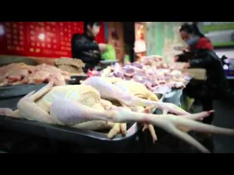 New Most DEADLY BIRD FLU Virus KILLS 23 HUMANS, 100s Infected -- CHINA. 4.29.13