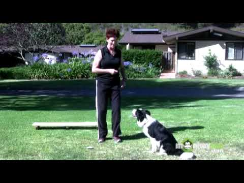 Dog Agility - Training your Dog to Nose Touch a Target