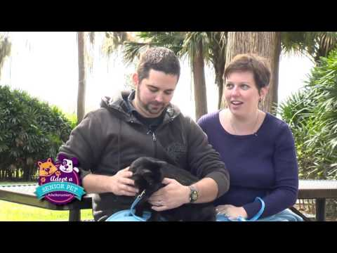 Animal Services - Shelter Seniors